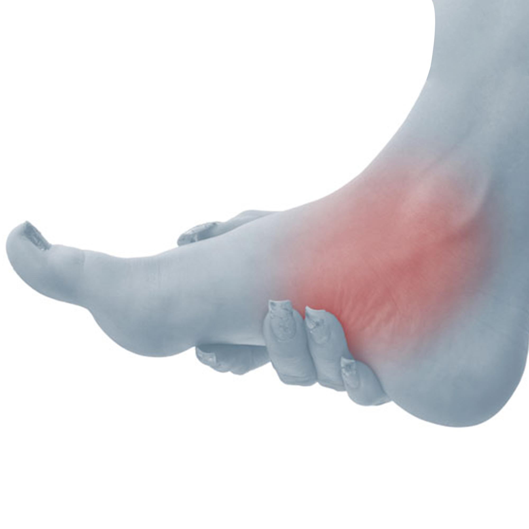 Ankle | الكاحل